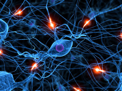Sinapsis neuronales