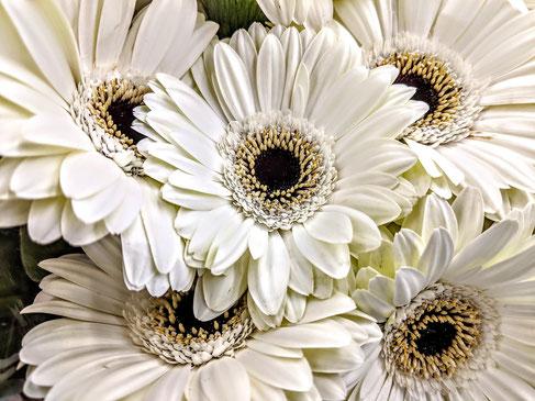 La couleur blanche dans la Bible est associée à la sainteté, à la pureté et à la justice.