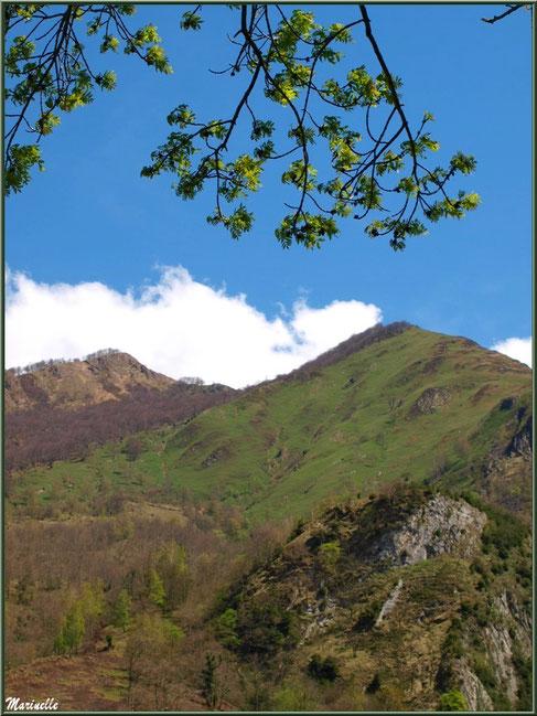 Vue sur les Pyrénées depuis la Pisciculture des Sources à Laruns, Vallée d'Ossau (64)