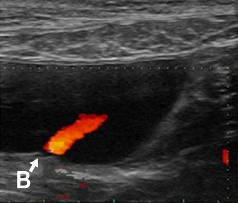 dog ultrasound