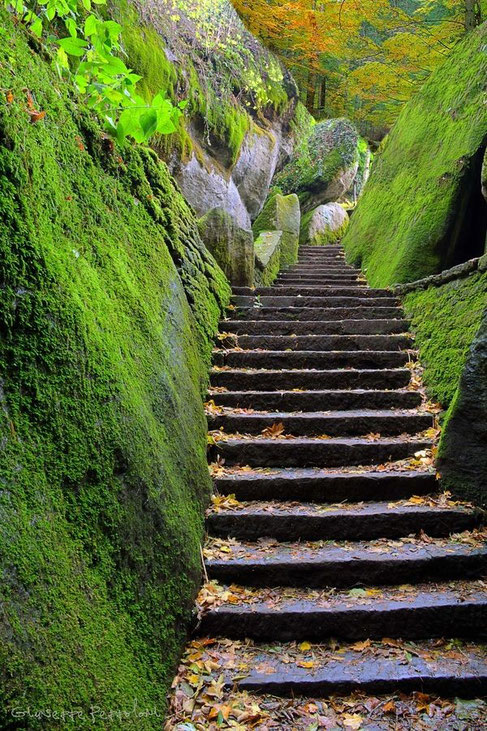 I gradini dell'amore - G. Giaquinta
