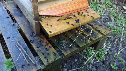 #Bienensterben #Lichtemissionen #Bienentod #Tod der Bienen