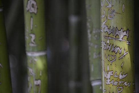 Graffitti mal anders, Bambuspflanzen mit Schnitzereien von Besuchern des Jardin Majorelle