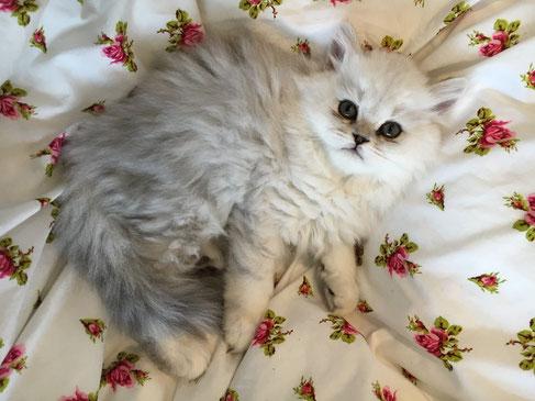 Amelie im Alter von 10 Wochen (Foto: 5.1.2016)