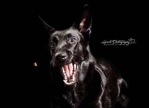 Leckerlie Bilder, Leckerlie Wurfbilder, Studio Aufnahmen, Hunde, Hunde vor schwarzem Hintergrund fotografiert