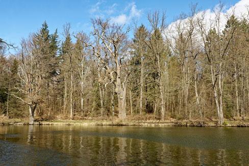 Adlereiche im Wildpark Stuttgart bei Stuttgart