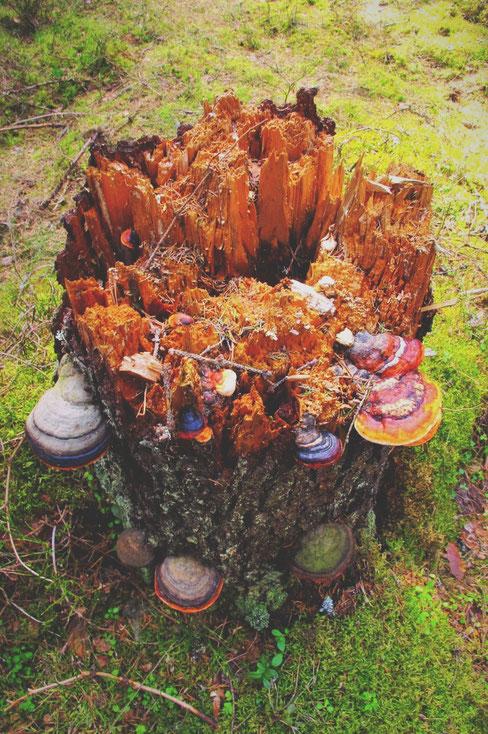 bigousteppes finlande rando foret champignons