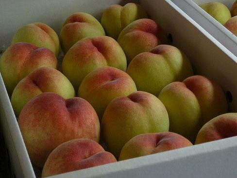 検査に出された早生の品種「白鳳」ほんのりピンクが愛らしい桃です