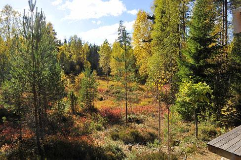 Am Freisitz hinterm Saunahaus- Herbstimpressionen