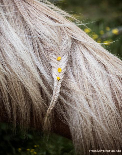 Pferd wachen, Pferd einflechten, Was kann man mit Pferd machen ohne zu reiten, Pferd im Sommer bei Hitze, Achtsamer Umgang mit Pferd