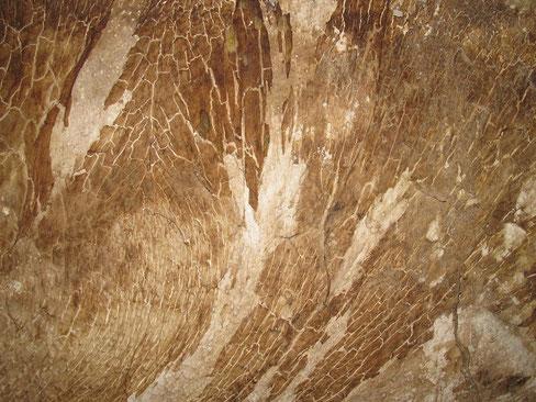 Die Natur als Künstlerin - Mycel eines Echten Hausschwamms