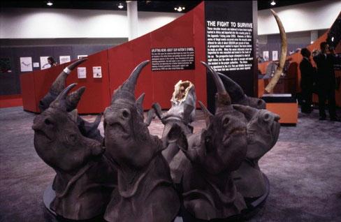 Konfiszierte Exemplare der CITES-Behörde der USA (CoP9, Fort Lauderdale, USA)