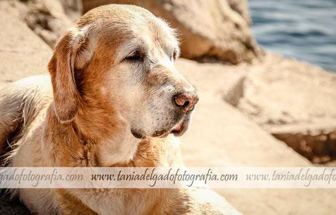 Fotografía de Mascotas, Fotografía de Animales
