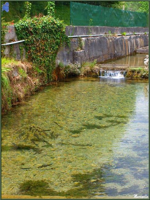 Un des ruisseaux et quelques truites au fil de l'eau à la Pisciculture des Sources à Laruns, Vallée d'Ossau (64)
