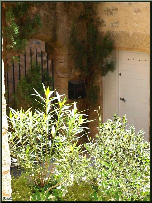 Recoin verdoyant au détour d'une ruelle, village de Cucuron, Lubéron (84)