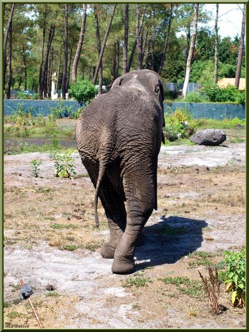 Eléphant, Zoo du Bassin d'Arcachon, La Teste de Buch (33)