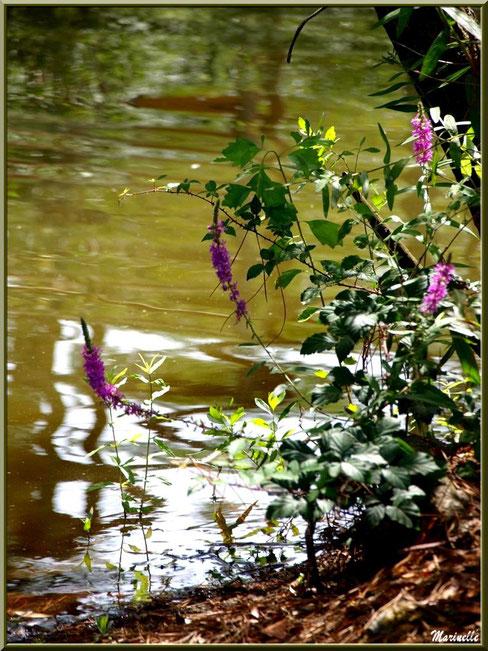 Mare, reflets et végétation, Zoo du Bassin d'Arcachon, La Teste de Buch (33)