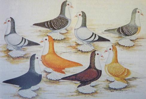 Gemälde von Thüringer Weißlätzen (Original im Deutschen Taubenmuseum in Viernau)