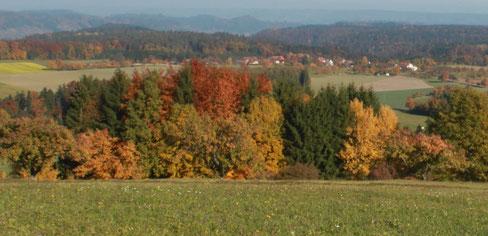 Lebensraum Waldrand im Herbst [© Foto: Dr. G. Strobel]