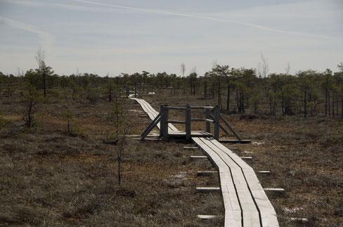 Visit Latvia, hiking through bogs
