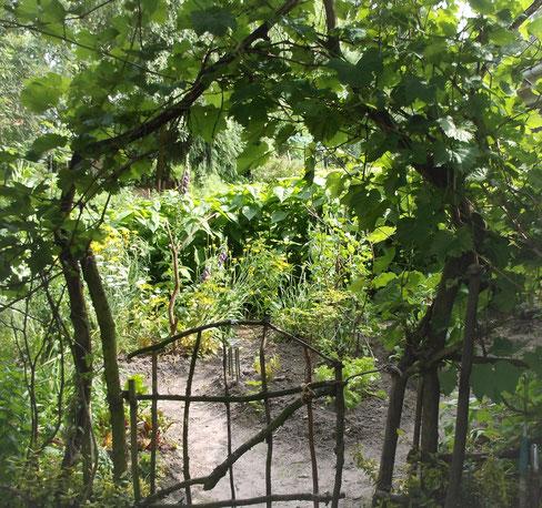 Kräuter Pflanzen im Garten