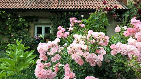 Klettergerüst Rosen : Bilder und beschreibungen aus den gärten zum vergrößern des bildes