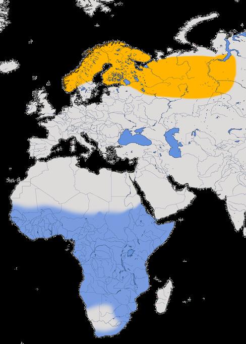 Karte zur Verbreitung der Nordische Schafstelze (Motacilla flava thunbergi)