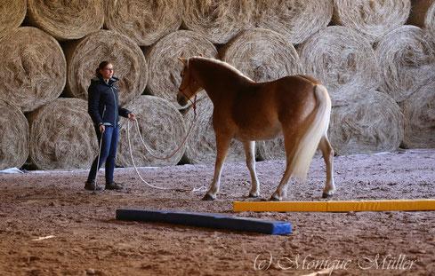 Gelassenheitstraining Pferd Kurs, Lehrgang Bodenarbeit, Knotenhalfter, Agility, Bodenarbeitsseil, Haflinger