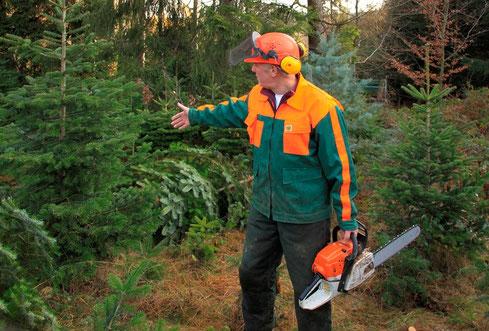Weihnachtsbaumkultur am Waldrand
