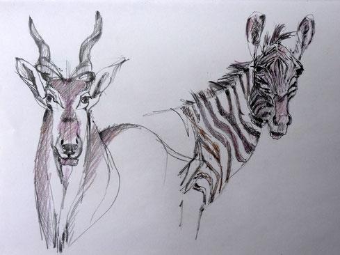 Gnu / Zebra 2005 (Farbstift)