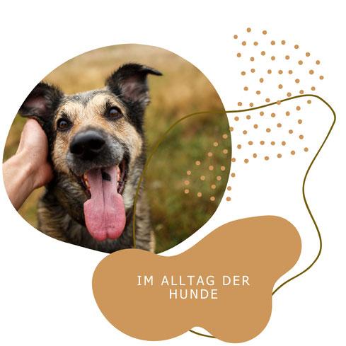Hundetraining hat den größten Erfolg im Alltag der Tiere oder zu Hause bei den Besitzern