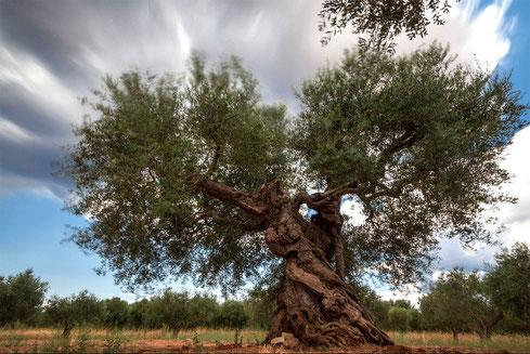 """Il mio scatto presente nella collettiva """"Il respiro degli alberi"""" che si è tenuta ad Agosto 2017 a Palmariggi (LE)"""