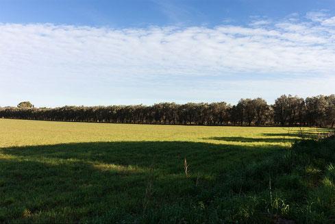 Colori delle campagne del Salento. Tra verde, azzurro e nuvole.