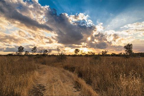 Sentiero, campagna salentina. Paesaggio dopo la pioggia.
