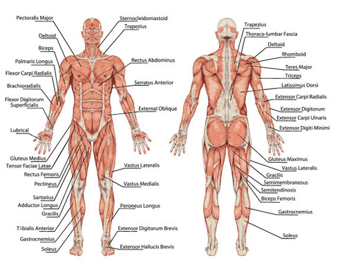 Thai Foot Reflexology Course