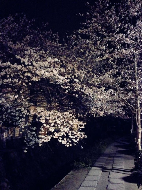 哲学の道 夜桜 スマートフォンで撮影
