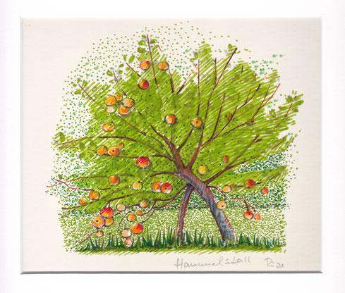 Apfelbaum - Hammelstall in der Uckermark . 2021 . Filzstift/Karton