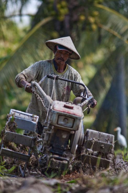 """""""Labeurs"""" Portrait d'un riziculteur Balinais"""
