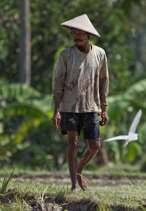 Riziculteur à Bali
