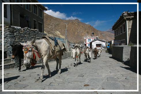 Nepal_Mustang_Reisefotograf_Jürgen_Sedlmayr_18