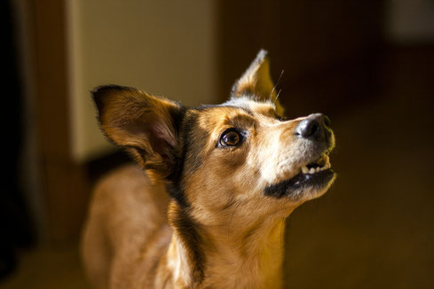 TREUE HUNDEPFOTEN - Stress- und Gewaltfreies Hundetraining