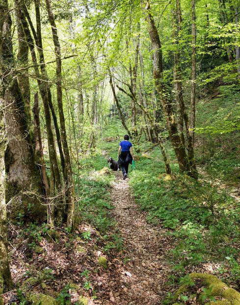 Der Naturwald Vallée d' Engens beim Nozon