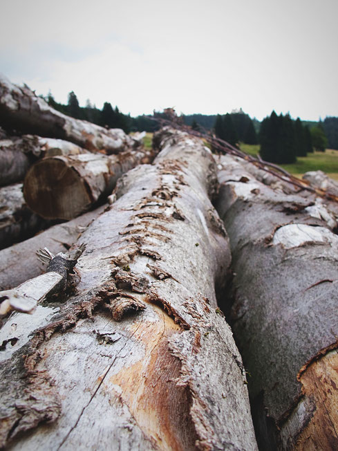 allemagne forêt noire bois