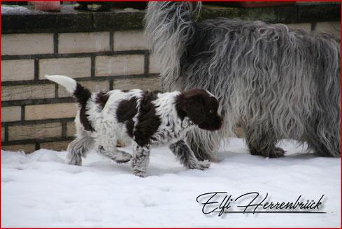 Zwei Welpen stampfen und spielen im Schnee