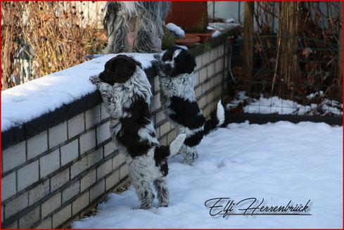 Zwei Welpen im Schnee