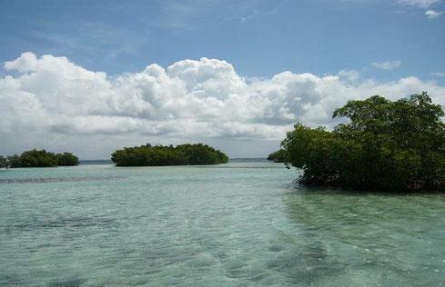 mangrove écotour cul de sac marin