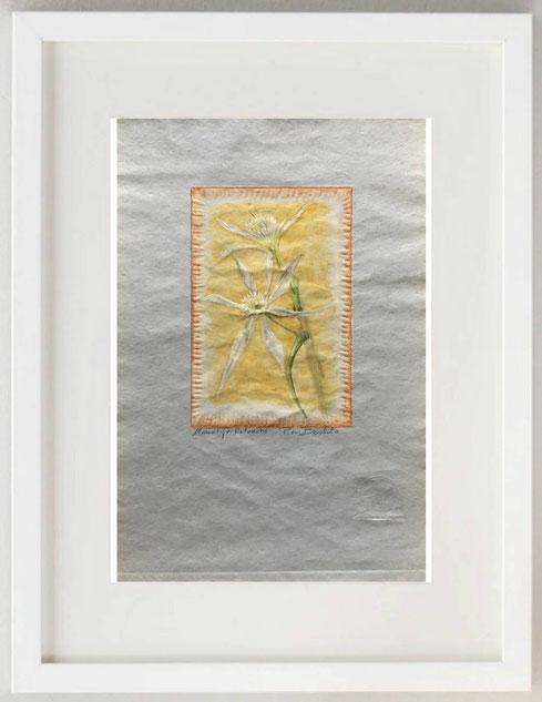 55 / PIERANGELO BERTOLO, GIGLIO BIANCO DI MARE, 2020, linoleum grafia retouchè, 20 x 30