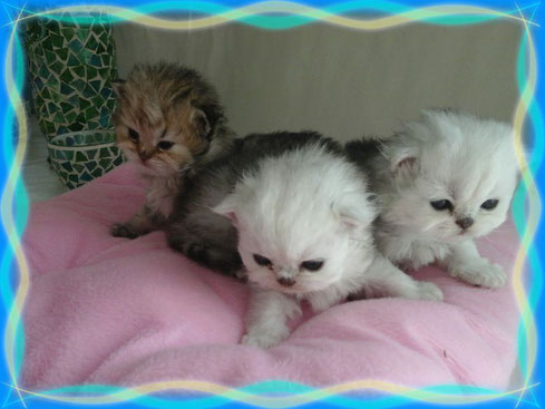 Adrian, Amira,  Alisha und Amelie
