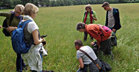 Zwanzig Augen sehen mehr als zwei - Mitglieder der AG Botanik bei der Suche nach seltenen Ackerwildkräutern bei Hiltrup (Foto: Thomas Hövelmann)