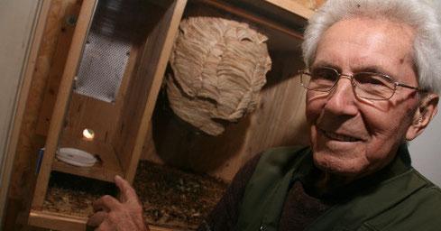 Konrad Schmidt vor dem Schaukasten mit einem lebenden Hornissenvolk in seiner Ausstellung auf Haus Heidhorn (Foto: WN/Markus Lütkemeyer)